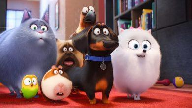"""Photo of Non perdetevi il film di animazione """"Pets – Vita da animali"""" !"""