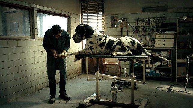 Dogman recensione