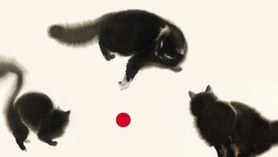 Photo of Se i gatti scomparissero dal mondo: in arrivo il remake Usa tratto dal bestseller di Kawamura Genki