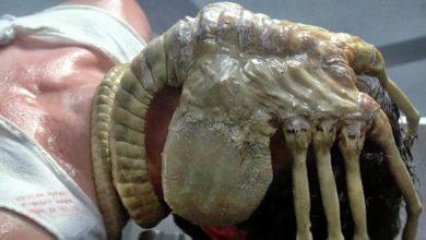Photo of Alien: la mascherina di una fan diventa un Facehugger