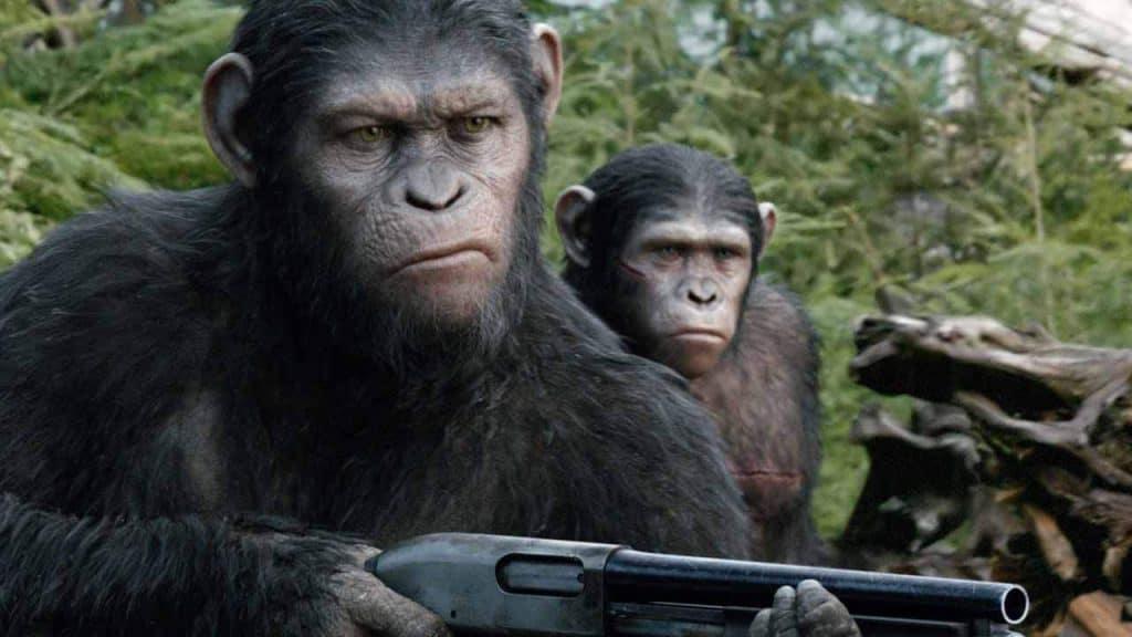 furto scimmie